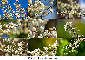 collage of small flower on spring backgrounds - spring...