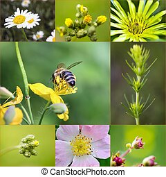 collage of spring flowers in meadow