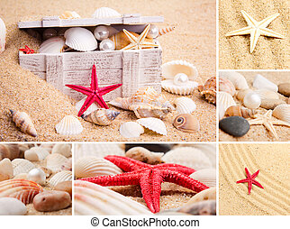 Collage of summer seashells. collection of seashells. pearl...