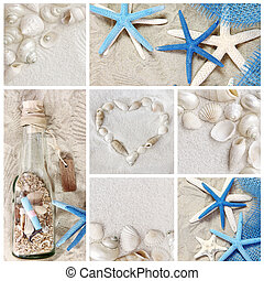 summer seashells - Collage of summer seashells