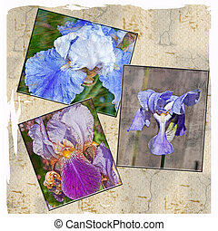 Collage of Textured Iris Flowers