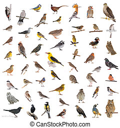 wild birds - collage of the wild birds isolated on a white ...
