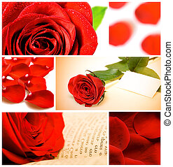 collage of various red roses