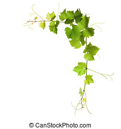 Collage of vine leaves on white background