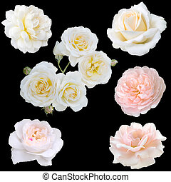 collage of white roses