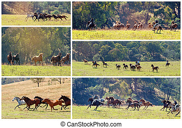 Collage Of Wild Horses Racing Across Country