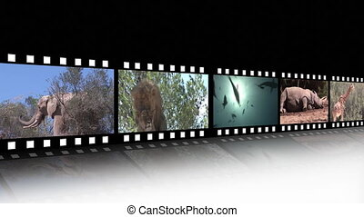 Collage of Wildlife footage - HD Wildlife footage Montage