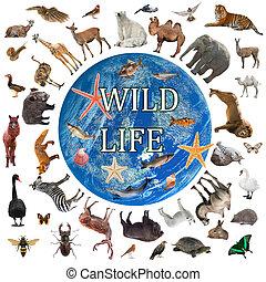 collage of wildlife walking around the world