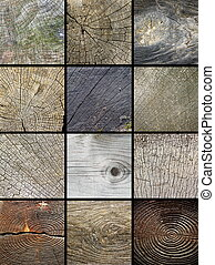 collage of wooden cut trunks textures