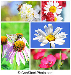 Collage on the theme of the summer flowers