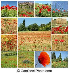 collage, -, paesaggio, papaveri, rurale, rosso