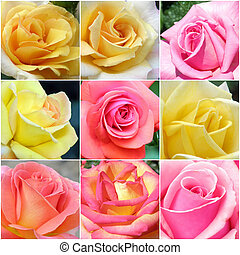 collage, photos, roses