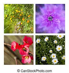 collage, printemps
