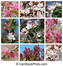 collage, printemps, -, saison, nature