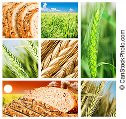 collage, productos, trigo