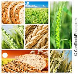 collage, produits, blé