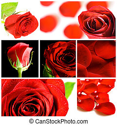 collage, rosas, vario, rojo