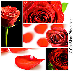 collage, roses, divers, rouges