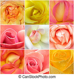 collage, roses, neuf, photos
