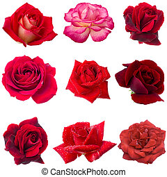 collage, roses, neuf, rouges