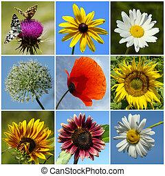 collage, rural, fleurs, coloré