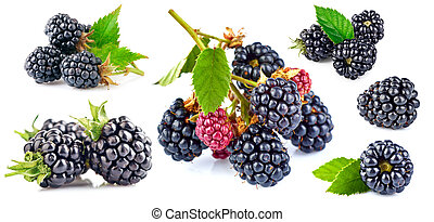 Collage set fresh berry blackberry with green leaf isolated on