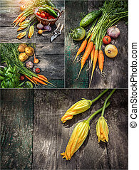 Collage set Harvest vegetables with herbs and spices on old