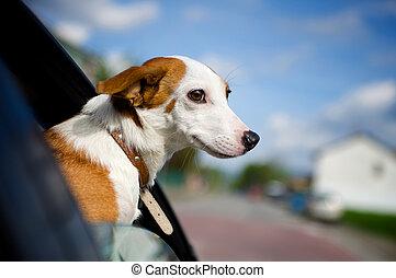 collage, tête, sien, voiture, chien, dehors