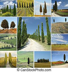 collage, toscana, cipressi