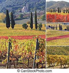collage, toscano, fantastico, vigne, paesaggio