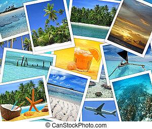 collage, tropikalne cele