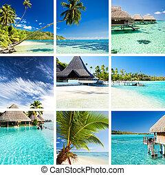 collage, tropikalny, wizerunki, tahiti, moorea