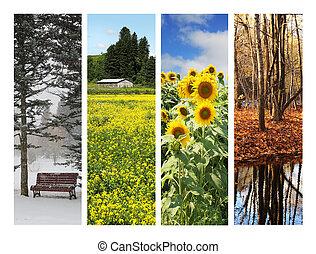 collage, van, 4, jaargetijden