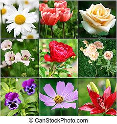 collage, van, anders, mooi, bloemen