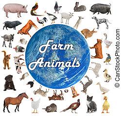 collage, van, boerderijdieren