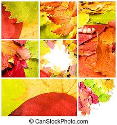 collage, van, gevarieerd, autumn leaves