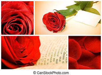 collage, van, gevarieerd, rode rozen