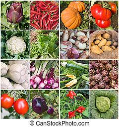 collage, van, groentes