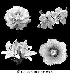 collage, van, zwart wit, bloemen, op, een, zwarte achtergrond