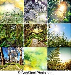 collage, verde