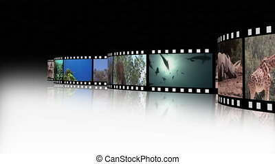 collage, vie sauvage, 2, métrage