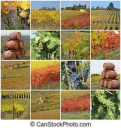 collage, vigne, colorito
