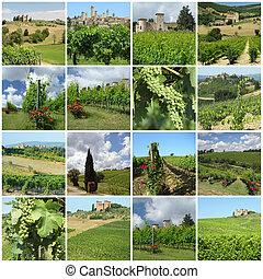 collage, vigne, verde