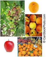 collage, von, landwirtschaft, fruechte