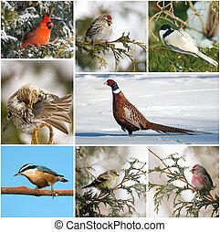 collage., winter, canada, vogels