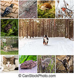 Collage with animals