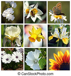 Collage with beautiful white and yellow flowers