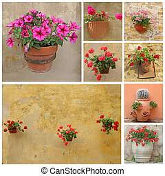 collage with flowers in rustic clay pots