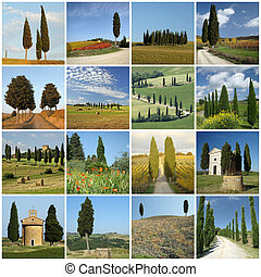 collage with italian cypresses