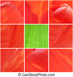 collage with macro photos of tulip